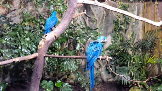 birds at the aquarium