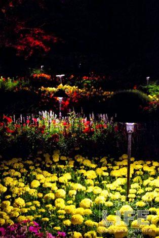 Butchart Gardens 84 Making A Life