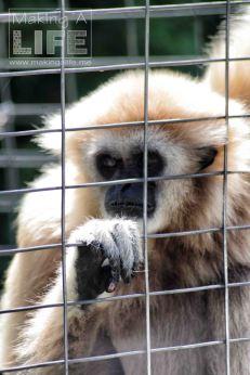 Primates Safari Niagara