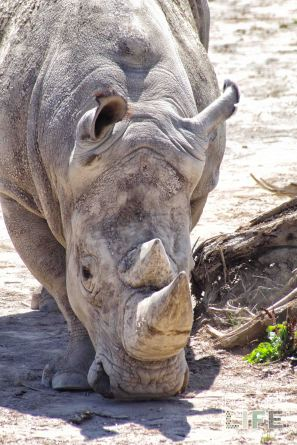 Rhino Safari Niagara