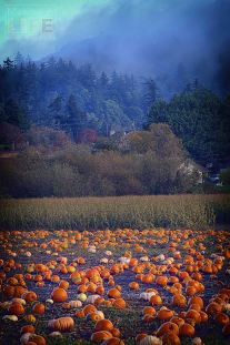 pumpkin-patch_making-a-life-1
