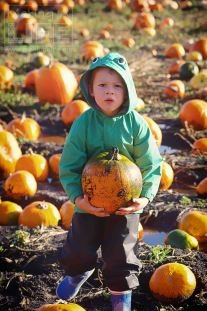 pumpkin-patch_making-a-life-2