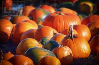 pumpkin-patch_making-a-life-6