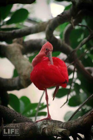 vanaqua_bird_making-a-life