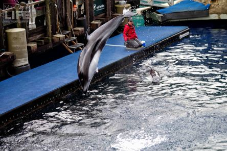 vanaqua_dolphin_making-a-life-6