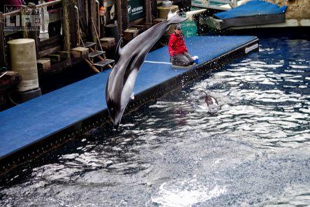 vanaqua_dolphin_making-a-life-6
