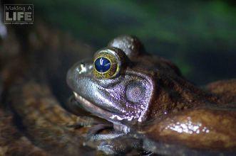 vanaqua_frogs_making-a-life-2