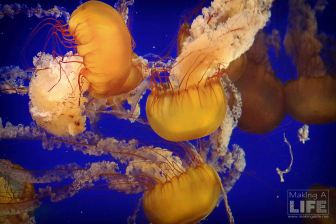 vanaqua_jelly-fish_making-a-life-11