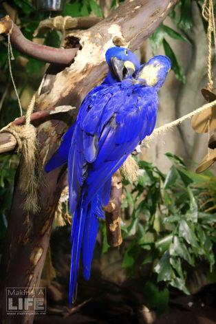 vanaqua_parrots_making-a-life